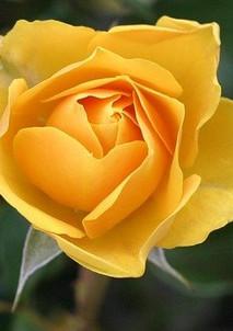 flower-113735_640.jpg