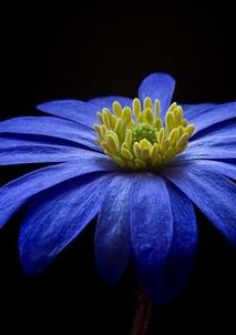 flower-56414_640.jpg