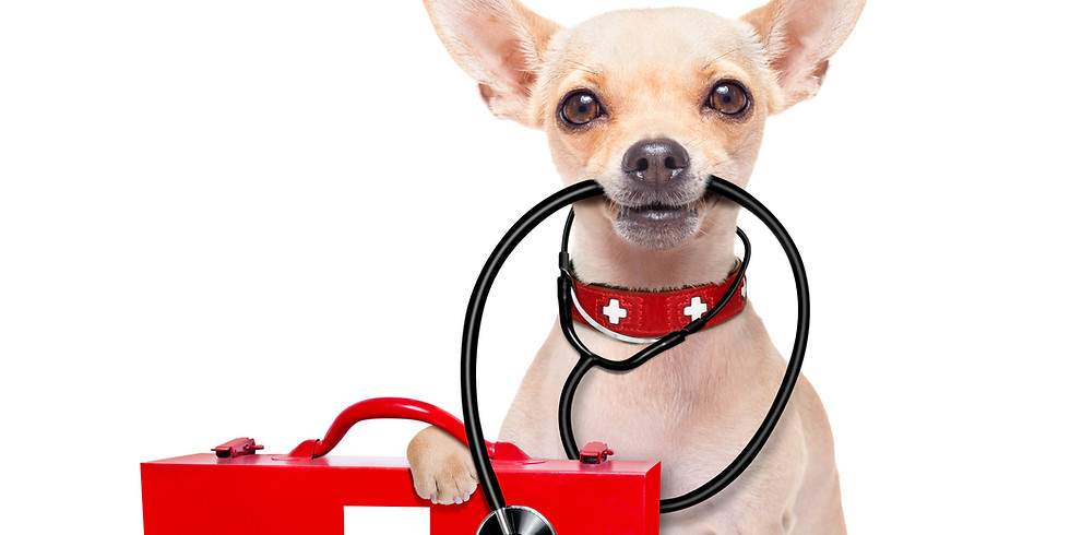 Notfälle beim Hund - Dr. med vet Urs Abbühl