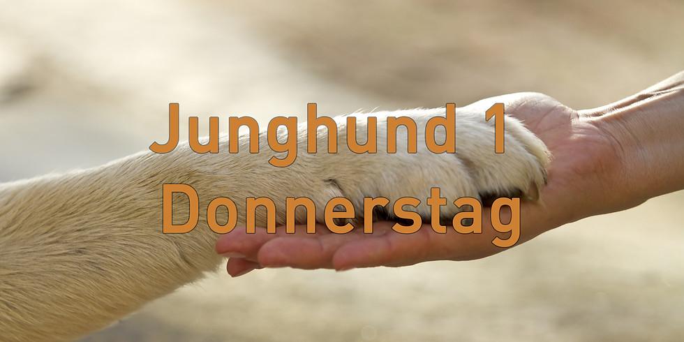 Junghund 1 Donnerstag, Start November 2019