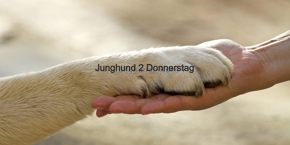 Junghund 2 Donnerstag, Start November 2019