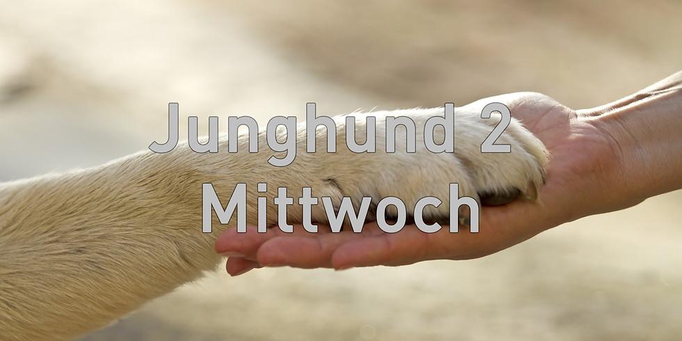 Junghund 2 Mittwoch, Start August 2020