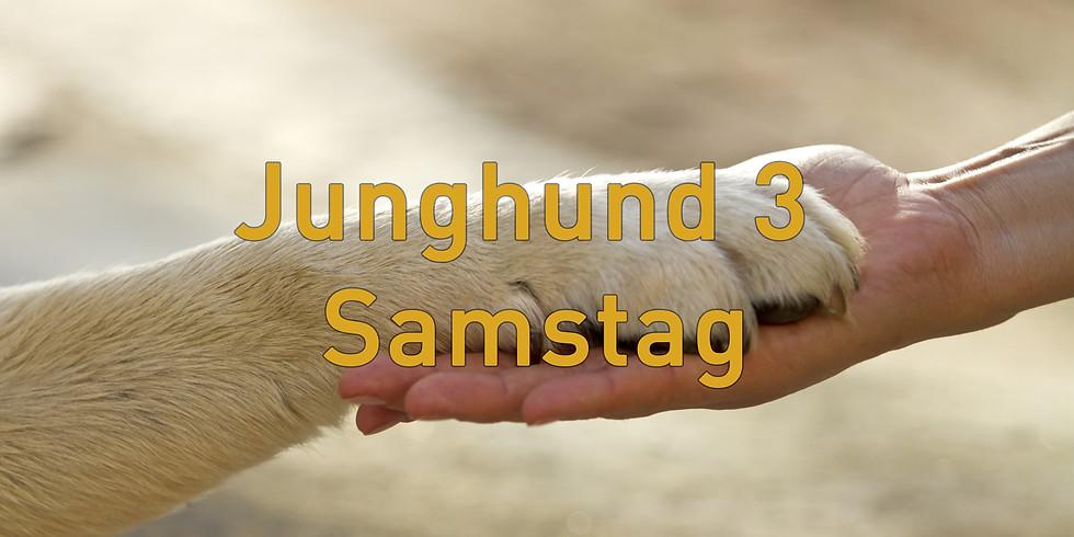 Junghund 3 Samstag, Start August 2021