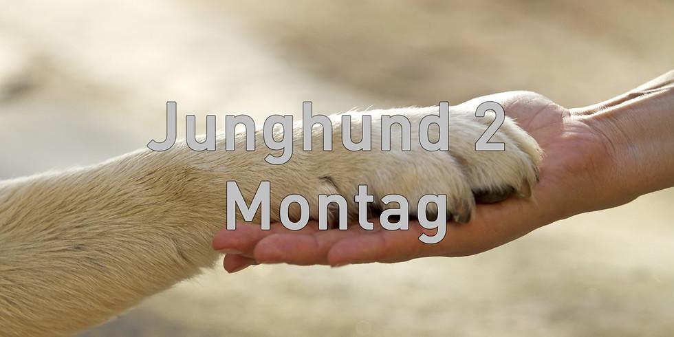 Junghund 2 Mittwoch, Start August 2019