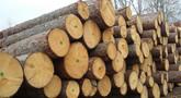 Scelta legno stagionato