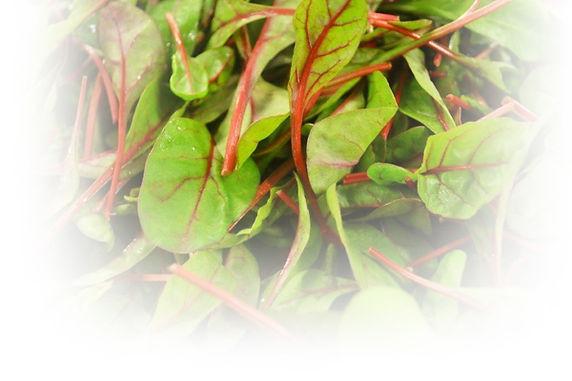Speciality Leaf