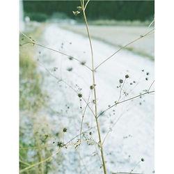 _0008_mizunoya02.jpg