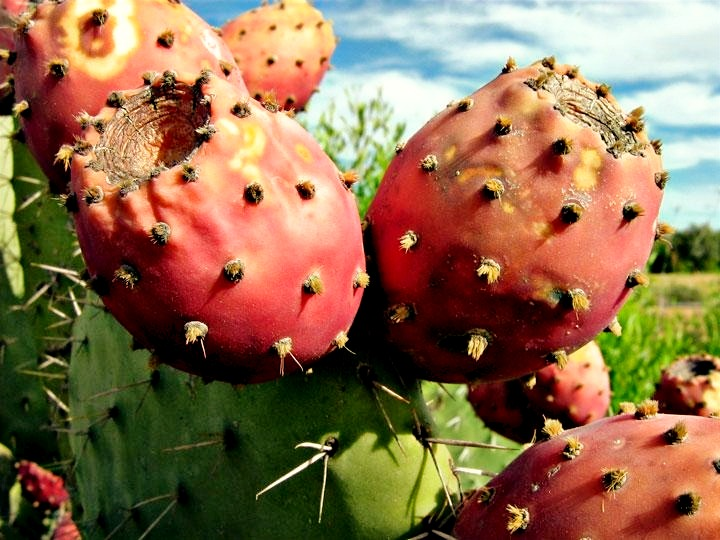 Prickly-Pear-Seed-Oil_edited.jpg