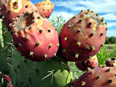 Prickly-Pear-Seed-Oil.jpg