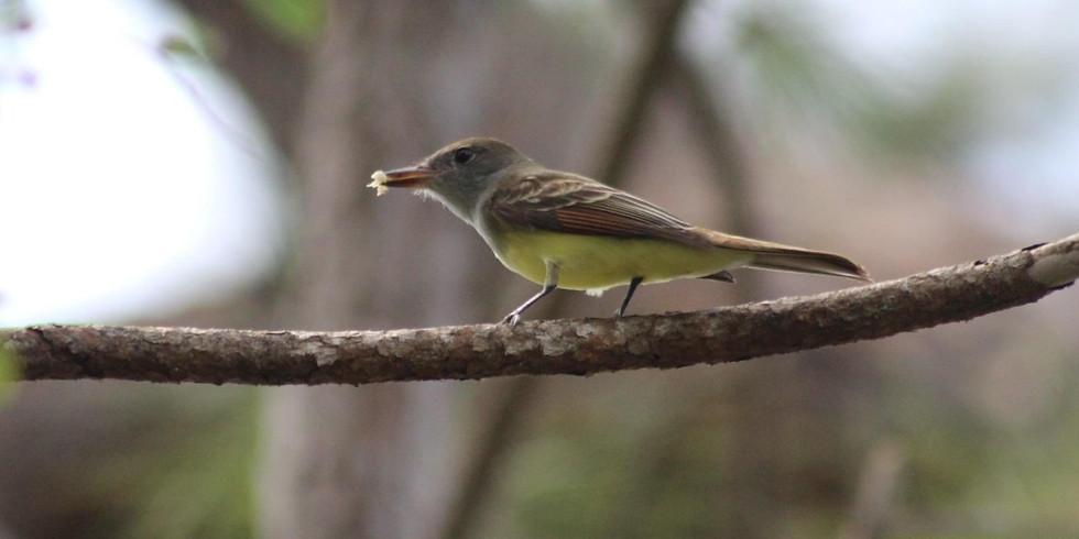 Migratory Bird ID Tour at Possum Long Nature Center