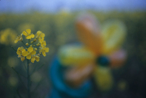 flowers_10_sm copy.jpg