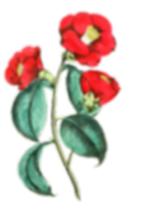 flower-1122583_1280.png