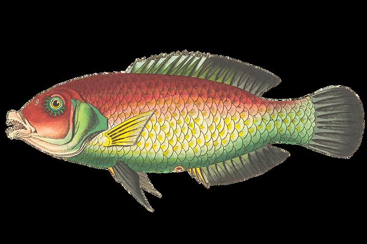 fish-1944245_1920_edited.png