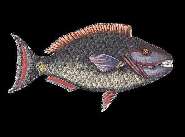 fish-1122592_1920.png