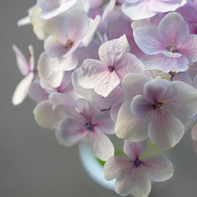 Hashtag Edible handmade flowers 😀. One