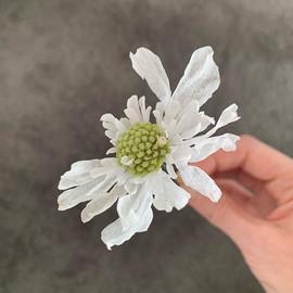 Wafer paper scabiosa  Цветок из вафельно