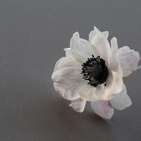 Edible anemone flower  Flower power  #ca