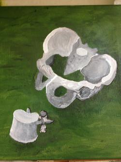 Chiropractic artwork -Pelvis