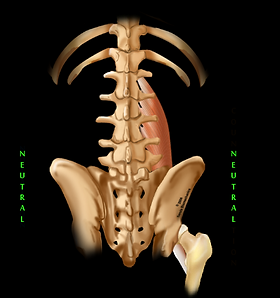 Chiropractor, back pain, Relief, Folsom, Sacramento, Posture, Core, Positioning, Body awareness, Webster technique