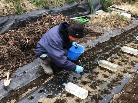 野菜づくり2年目の相川薫さんと雑談