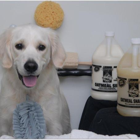 Oatmeal Shampoo and its Benefits