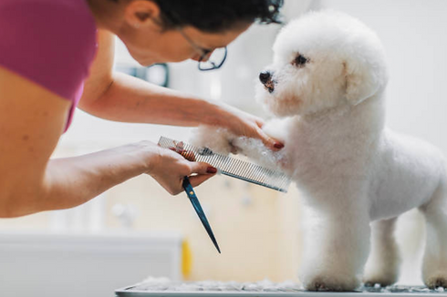 Mobile dog grooming services in progress in Charlotte, NC