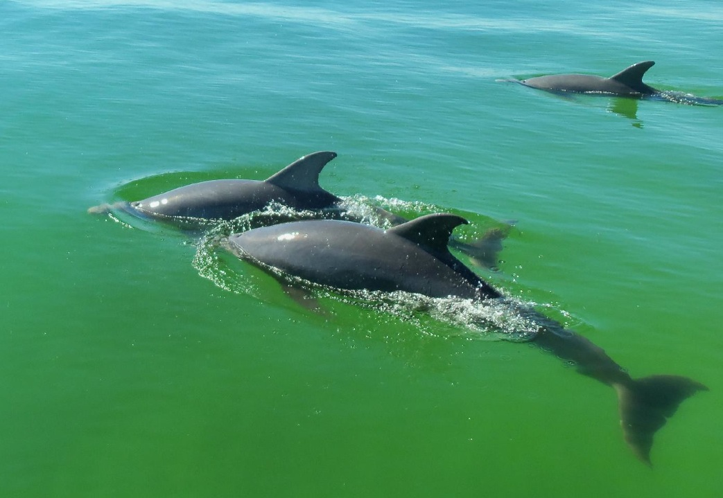 Dolphin Watching in Destin, Fl