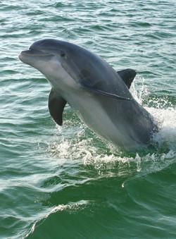 Dolphin Tours Destin, Fl