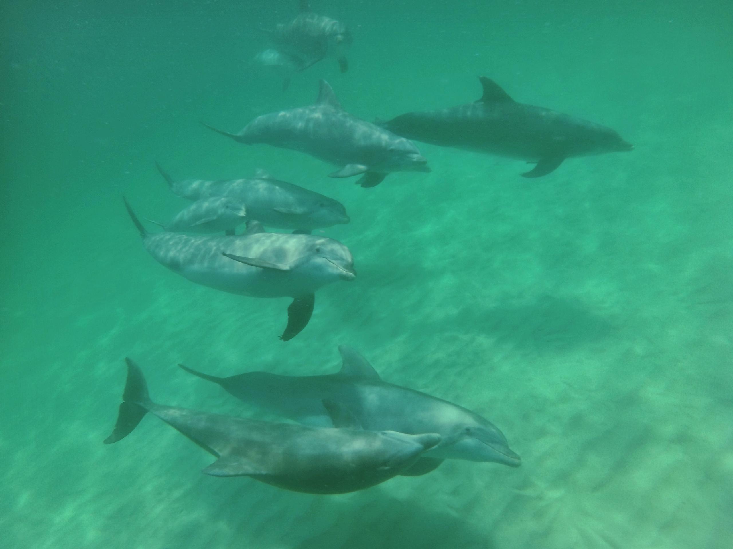 Destin's friendly dolphins