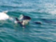 Dolphin Cruise Snorkel Trip Destin Fl, Dolphin Tours Destin Fl, Snorkeling in Destin Fl