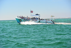 Sea Quest Dolphin Tour