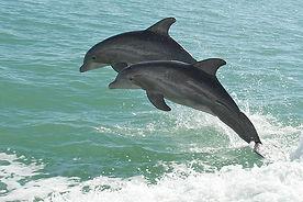 dolphins in destin fl