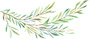ConiferBranches_07.png