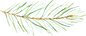 ConiferBranches_21_edited.png