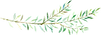 ConiferBranches_14.png