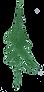 Pine - 17.png
