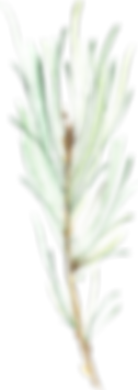 ConiferBranches_20.png