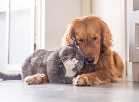 Dogs and cats protect babies against allergies and asthma — and the more pets, the better - Allergy