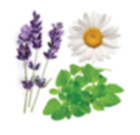 plantes serenity.JPG