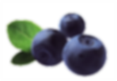 bilberrypourF_copy.png