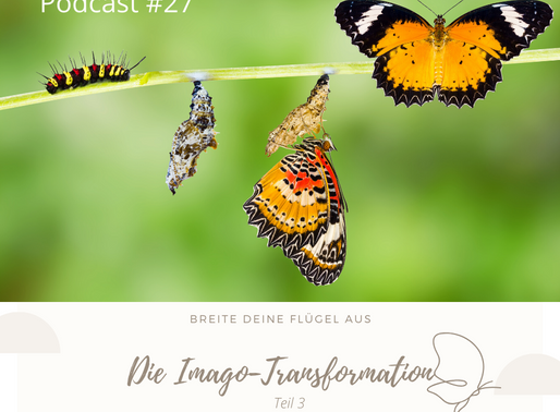 Die Imago-Transformation (Teil 3)