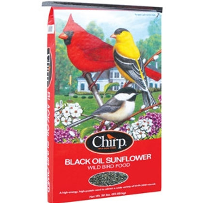 Oil Sunflower Seed