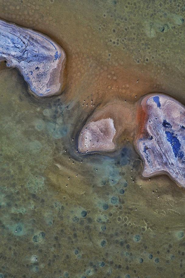 Pointillism_of_flamingos_©Magali_CHESNE