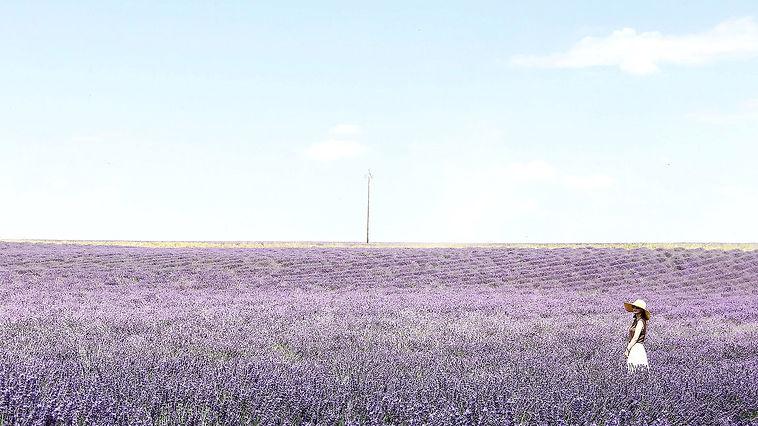 Miss Lavender.jpg