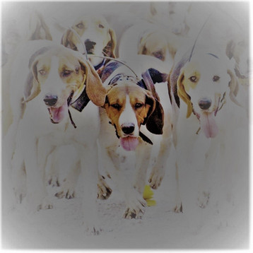 hounds pic perf trial 2.0.jpg