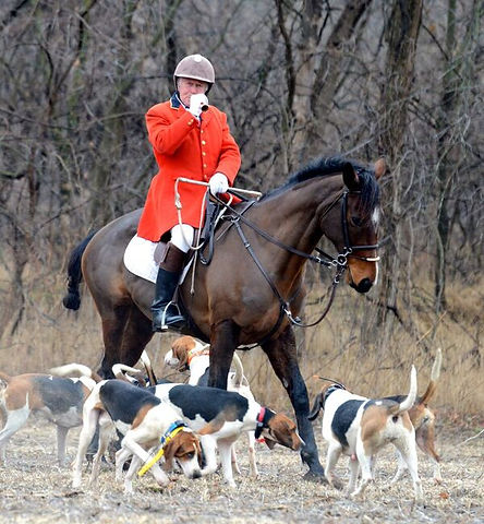jim blowing with hounds.jpg
