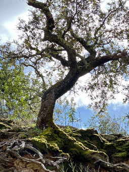 hanging by its roots.jpeg