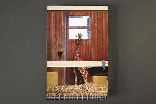 Bild Giraffe / AluDibond