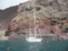 Agapanthe_II_aux_Islas_Desertas,_Madère.