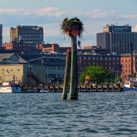Fore River, Portland, Maine (07/24/19)